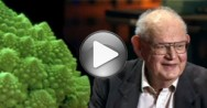 TED: Benoit Mandelbrot, Fractals and the art of roughness
