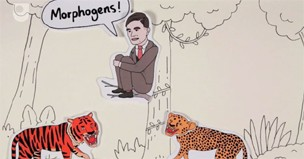 OU Video: Patterns of Life – Alan Turing and Morphogenesis (#4/5)