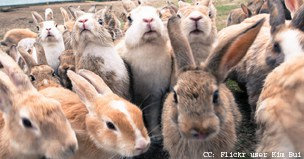 The mathematics of Rabbit Island